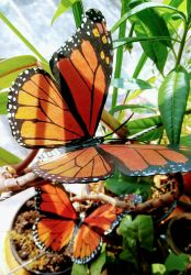 Monarch Butterfly Papercraft by RobertoArreola