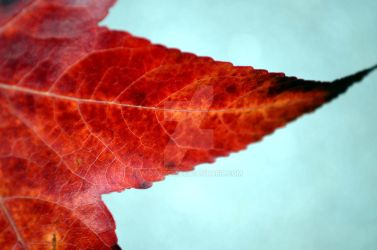 autumn leave by mokusch
