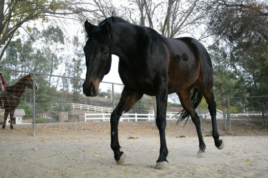 unnamed mare stock 06 by xbr0kendevotion