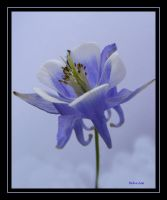 Beautiful Blue by Deb-e-ann