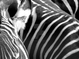Stripes by Kevin-Welch