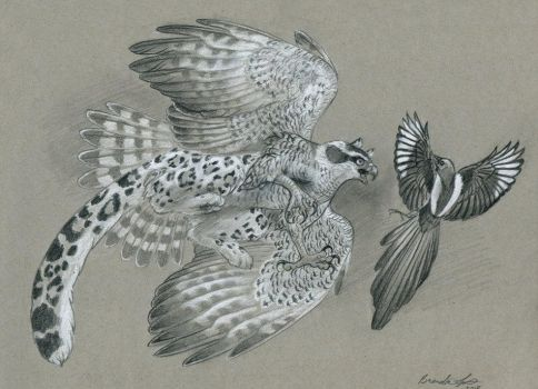 Goshawk Gryphon and Magpie by windfalcon