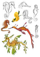 Seahorse Studies by anqila