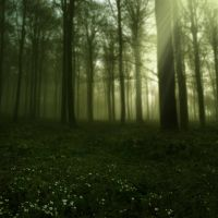 Elven Forest I by Lunia-Stock