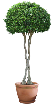 plant png 12 by DIGITALWIDERESOURCE