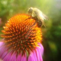 Bee by Couleur345