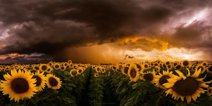 Independence Day by borda