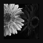 Black and White II by jhps