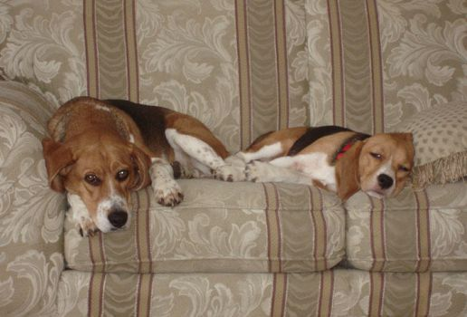 Gus and Lily on Love Seat by ChewySmokey