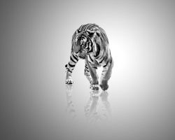 Tiger, black and white by tompot