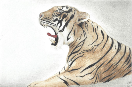 Tigre by rudy321