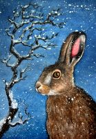 hare in the snow by moussee