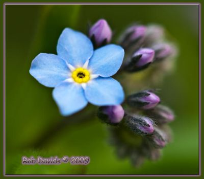 Forget Me Not 2 by Mellon-001