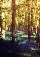 Bluebell Wood by MagpieMagic