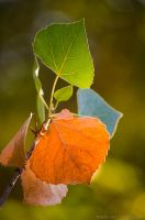 First signs of fall by isotophoto