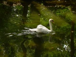 Swift Swan by evilpokejuggalette
