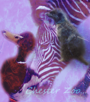 Chester Zoo by Flaming-Cheetah