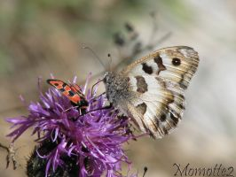 Two friends on a flower by Momotte2
