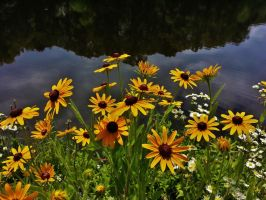 Lake Waterford Floral Scene by Matthew-Beziat