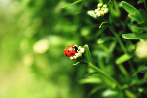 lady bug by itsRisingLove