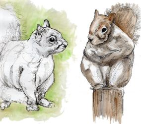 Squirrels by valiant-nk
