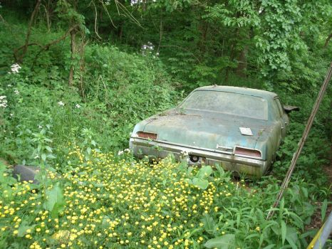 Old Car Surrounded by Flowers by SacredJourneyDesigns