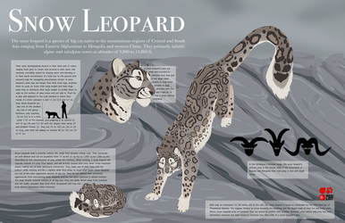 Snow Leopard Info Graphic by Nythero
