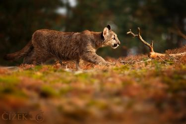 I'm going for that stick by Lion-Redmich