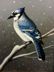 Wintertime Blue, Blue Jay by pm3013