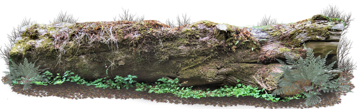 Giant Log PNG.. by AledJonesDigitalArt