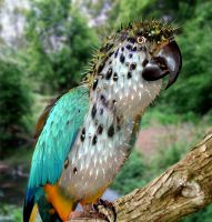 Puffy The Parrot by ozplasmic