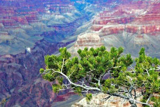 Grand Canyon 130 2015 by Moppet-Smiles