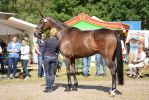 Conformation - Athlethic Warmblood 02 by LuDa-Stock