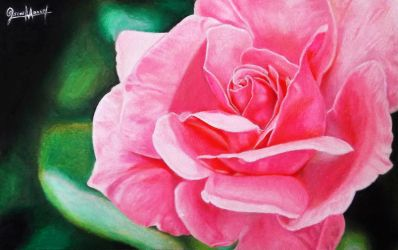 Happy Rose. (Colored pencil drawing) by Oscar-Manuel