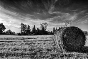 Fall Bails by DontHideTheMadness