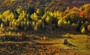 Autumn colors in Apuseni Mountains 8 by adypetrisor