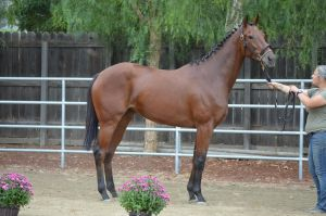 DWP FREE HORSE STOCK 146 by DancesWithPonies
