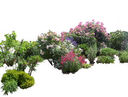 Flowered garden png 03 by HermitCrabStock
