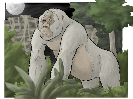 Killer Gorilla from Congo by WSnyder