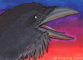 ACEO Raven by armaina
