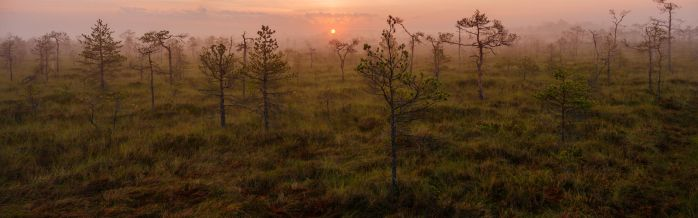 foggy sunrise in bog by dzorma