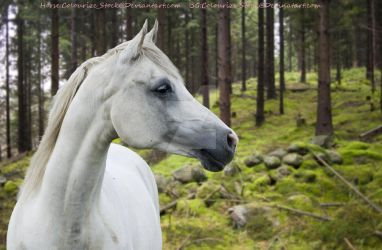 Grey Horse Pic2 by MollyMay335