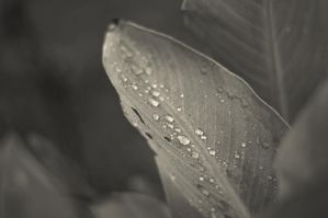 After rain by Winstein