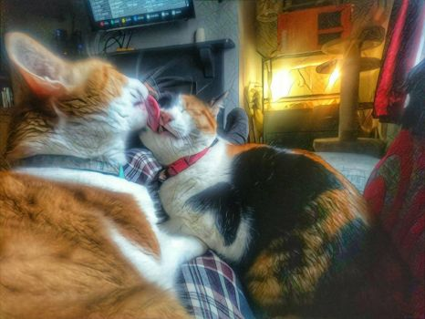 Lap cats  by thebaron7