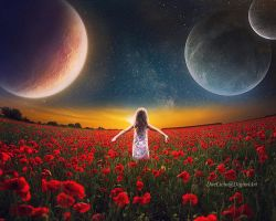Sunset on poppies field by doclicio