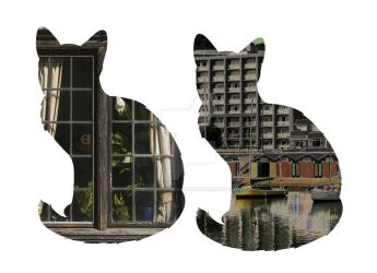 Cats and Photography Montage by VenusFlowerDesignNZ