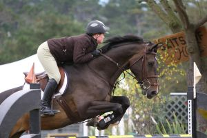 Brown Warmblod Show Jumping Rider Equitation by HorseStockPhotos