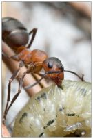 Ants go shopping 2 by EdwinBont