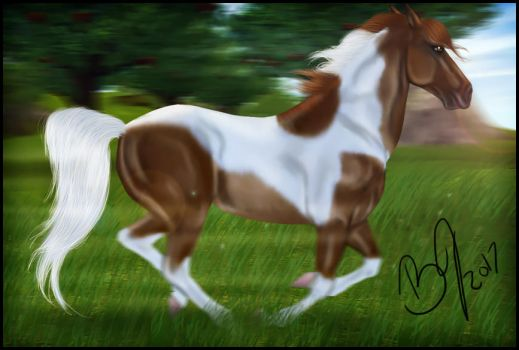 Sso Tobiano Quick Speed Edit by VIP-EquineArt