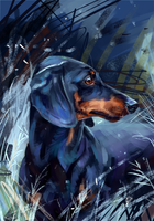 dachshund by AlaxendrA